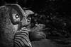 Stone Owl In The Gardens (Mike Schaffner) Tags: bw blackwhite blackandwhite carved cheekwood cheekwoodartandgardens cheekwoodbotanicalgardensandmuseumofart garden monochrome owl statue stone nashville tennessee unitedstates us