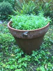 Foto 143 (siavogel) Tags: 2018365 growing green snail