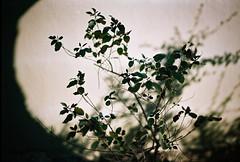 Synthesis (Eleni Maitou) Tags: analogue 35mm canonae1 naturephotography nature ngc ngcw