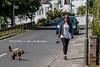 Dog walking (PhredKH) Tags: canonphotography fredknoxhooke fredkh london northlondon photosbyphredkh phredkh splendid streets streetsoflondon dog dogwalkers southgate candid people road outdoorphotography peoplewatching bicycle eastwalk peopleonthestreet streetphotography