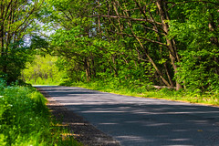 Forest road on the edge of the city (Bela Bodo) Tags: route scenery countryside foliage forest woodland path roadway colorful
