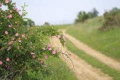 On the edge of the road (Baubec Izzet) Tags: baubecizzet pentax bokeh flower spring nature