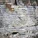 Sandstone (Middle Pennsylvanian; Frazeysburg Pit, Muskingum County, Ohio, USA) 3