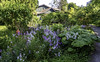 Back alley weeds (Tony Tomlin) Tags: crescentbeachbc britishcolumbia canada southsurrey mudbay weeds hydrant