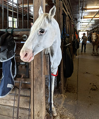 Horse.RockCreekDC042218.125626edit2color (jrm_rr) Tags: horse head ears stable rockcreekparkhorsecenter rockcreekpark turn look washington washingtondc snout