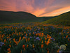 Growing In Bunches (jojo (imagesofdream)) Tags: wildflowers kerncounty california landscape sunrise shootlocal