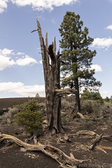 SedonaVacation_May2018-3211 (RobBixbyPhotography) Tags: arizona flagstaff sedona sunsetcrater vacation nationalmonument volcano travel