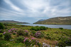View from Killary Harbour Fairy Tree, Connemara, Ireland. (PeterJJC-Ireland) Tags: may morning ireland connemara countygalway ie