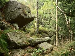 Schierke_e-m10_1019021895 (Torben*) Tags: schierke harz olympusm17mmf18 olympusomdem10 rawtherapee wald forest felsen rocks birken birchtrees
