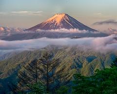 May morning Fuji (shinichiro*) Tags: 大月市 山梨県 日本 jp 20180520ds53327hdr 2018 crazyshin nikond4s afsnikkor70200mmf28ged fuji japan spring may 大峠 nik hdr 42471403231 candidate みくりや201806