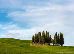Cypress trees in the green (Hans Kruse Photography) Tags: cypress valdorcia italy tuscany