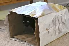 Andy The Panera Cat (+David+) Tags: andy panera bag easter