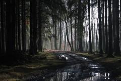 Après la pluie (Nature vosgienne et ardennaise) Tags: nature exterieur outside belgique foret chemin sentier bois europe landscape beauty canon pluie dream brume