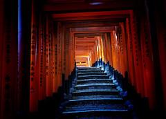 Fushimi Inari Taisha L (Douguerreotype) Tags: vermilion torii temple shrine kyoto stairs city steps gate red japan
