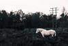 Wild Pony (daveflitter) Tags: pony horse wild animal bw blackandwhite splittone common nature