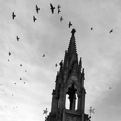 Bentinck Memorial (Dun.can) Tags: bentinckmemorial mansfield notts gothic 1849 marketplace birds pigeon