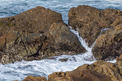 Black Oystercatcher (Matt McLean) Tags: bird california carmel coast intertidal monterey oystercatcher pointlobos shore wildlife