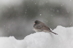enough already (jimmy_racoon) Tags: canon 400mm f56l 5d mk2 birds nature prime winter canon400mmf56l canon5dmk2
