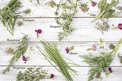 Tarragon, Rosemary, Chives, Sage, Marjoram and Dill herbs on a rustic table top with edible flowers (Transient Eternal) Tags: herbs savory aromatic healthy flavorful flavor textured texture green leaves plants seasoning tasty culinary cuisine spices flavoring cook chef marjoram origanummajorana oregano origanumvulgare mediterranean tarragon salvia mentheae sage herbaceous fresh freshness rosemary rosmarinusofficinalis condiment tabletop rustic kitchen table edibleflowers white wood chives bunches