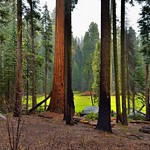 A Look Through the Trees to More Trees Beyond (Sequoia National Park) thumbnail