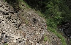 Nasco (bulbocode909) Tags: valais suisse chiens mex montagnes nature forêts arbres torrents printemps vert sentiers caillasses