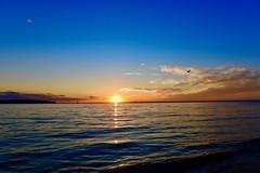 Summer begins! (ineedathis, Everyday I get up, it's a great day!) Tags: sunset reflections sun sea sailboats seagull bird avian horizon golden clouds bluesky hobartbeach huntington longisland newyork nikond750 summer nature beach water seaside shore