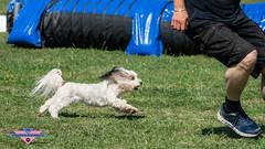 _DSC0578 (SeverX9) Tags: sony alpha 6500 70200gf4 dog run