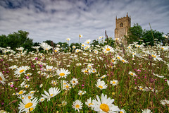 Spring Flowers at Wiveton (andybam1955) Tags: oxeyedaisy flowers church sky northnorfolk rural landscape norfolk wiveton