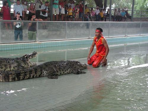 В пащу крокодилу Паттайя Таїланд Thailand InterNetri 40