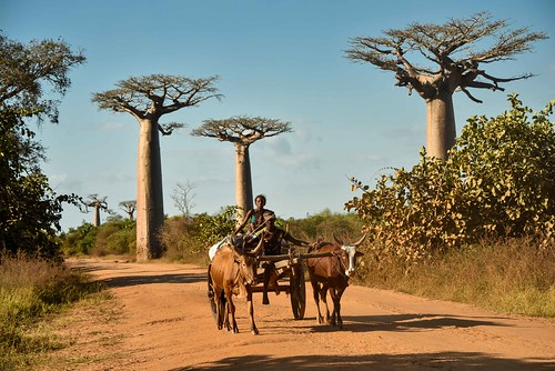 Baobabs and Cart