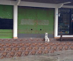 Indonesia-Bali White Dog 20171201_114149 LG (CanadaGood) Tags: asia seasia asean indonesia bali kintamani cameraphone indonesian balinese animal dog building canadagood 2017 thisdecade color colour green white