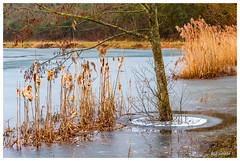 Piège de glace (Pascale_seg) Tags: landscape paysage étang riverscape gel givre frost frosty winter ice hiver froid gelé roseaux arbre tree moselle lorraine france nikon morning matin aube earth terre gelée