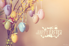 Happy Easter! :) (Pásztor András) Tags: nature easter egg happy colorful bunny dslr full frame nikon d700 andras pasztor photography 2018 hungary
