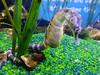 2018_03_SeaLife04 (GrazerX) Tags: sealife lochlomond aquarium fish scotland graemesimpson samsung galaxy s9 s9plus seahorse