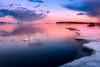 Joutsenet (Joni Salama) Tags: lauttasaari eläimet luonto auringonlasku jää talvi lintu valo joutsen meri helsinki suomi vesi uusimaa finland fi animals birds swans nature ice winter light