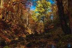 Foret du Vercors - Automne (Nik2o) Tags: 1020 sigma couleur dynamique ciel tree feuille arbre montage orange landscape bouvante auvergnerhônealpes france fr d7500 nikon vercors automne nik2o