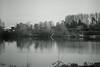 spring appearance (Amselchen) Tags: season spring water pond landscape trees mono monochrome bnw blackandwhite blur sony a7rii alpha7rm2 samyang 85mmf14 sonyilce7rm2