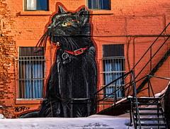 Chat noir (Paul Leb) Tags: artderue montréal québec canada streetart arteurbano chat noir black cat gato negro mural murale hoarkor hrkr hiver winter invierno neige snow