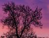 Sunrise throught tree 20180422-1 (weslowik) Tags: 2018 esoteric