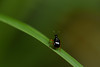 DSC_1099 (Hachimaki123) Tags: 日本 japan animal 動物 insect insecto 虫