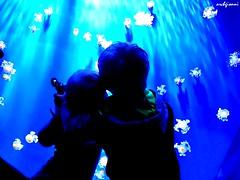 acquario genova (archgionni) Tags: acquario aquarium acqua water children bambini blu blue genova italy