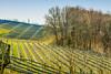 Fruit plantations in south-east Styria (a7m2) Tags: plantagen äpfel weintrauben steinobst wein most burschenschank styria austria