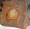 Calcite (North Vernon, Indiana, USA) 2 (James St. John) Tags: calcite calcium carbonate carbonates mineral minerals north vernon indiana jennings county