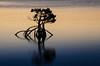 BtwdSeScp_006.jpg (fjblanco8320) Tags: twilight easter buttonwoodbay seascape sunset mangrove buttonwood keylargo florida unitedstates us