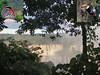 Basso continuo. Iguaçu Waterfalls, Diaethria clymena meridionalis, 88-Butterfly, and Toco Toucan, Ramphastos toco, Foz do Iguaçu, Brazil (Rana Pipiens) Tags: iguaçuwaterfallsfozdoiguaçubrazil 88butterfly tocotoucan ramphastostoco diaethriaclymena guaraní jesuits jesuitmissions benedictxiv domenicozipoli bassocontinuo baroque paraguay music musicalinstruments butterflies birds
