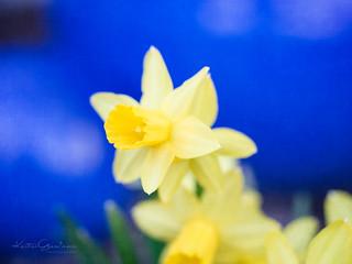 Spring power
