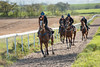 4 Furlong All Weather, Sandy Thomson Racing (Sandy Thomson Racing) Tags: horse racing sandythomsonracing staff team sandy thomson horseracing gallop jockey training