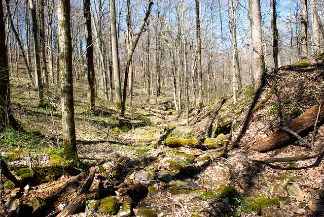 Hoosier National Forest - Big Creek - April 20, 2018