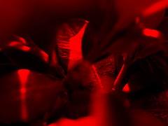 Blätter 6 (schubertj73) Tags: blätter leaves x10 fujifilm gimp fotografie foto fotos fotograf focus out sharp scharf unscharf photo photography photos photographer photoart makro macro makrofotografie macrophotography abstract abstrakt abstractart abstractphotography abstrait naturfotografie natur nature naturephoto naturephotography schubertj73 jörg schubert iserlohn art kunst artwork artworks artphoto artphotography artphotographer artist kunstfotografie kunstfotograf künstler