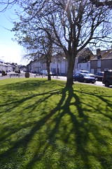 A tangle of tree shadow (lisakinneen3) Tags: shadow grass green branches wexford ireland light nature